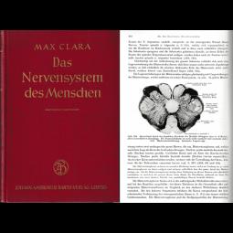 Das Nervensystem des Menschen